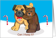Can I keep it? Teddy Bear and Pug Dog Christmas
