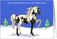 Pinto Arab Mare spirit of the Holiday