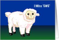 Miss Ewe sheep