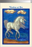 Ocean Beach Arabian Horse