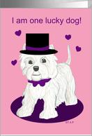Lucky Dog Westie Valentine