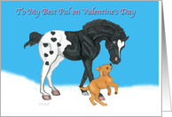 Appaloosa foal and puppy pal valentine